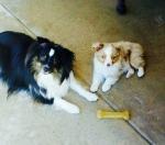 Uno and Teemu